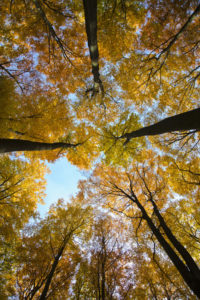 Bäume heilen. Jetzt endlich, stellen Wissenschaftler verwundert fest: Bäume heilen tatsächlich!